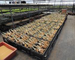 Export plants (1)