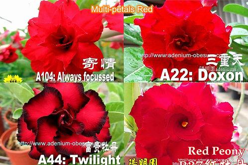 Multi-petals Red mixed