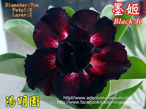 Black Ji