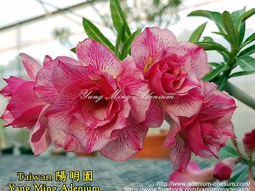 Chen Yuan Yuan