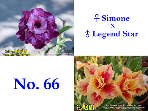 No. 66