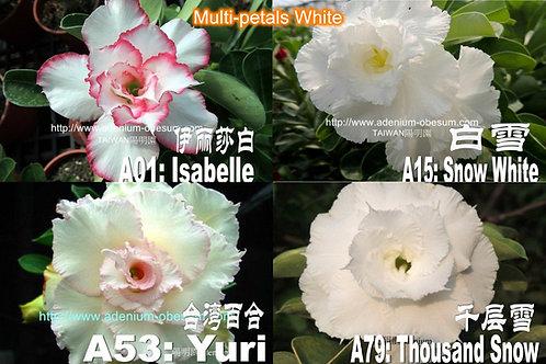 Multi-petals White mixed