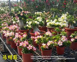 Mini size plants