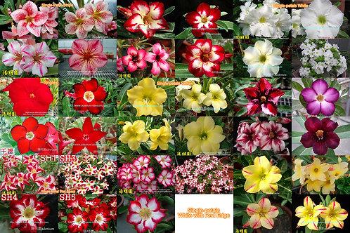 Single-petals mixed color