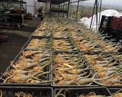 Export plants (2)