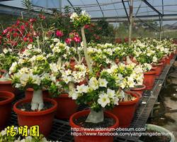 Mini white plants (1)