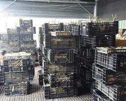 Export plants (3)