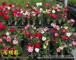 Seedlings (2)