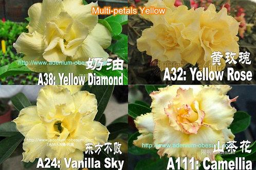Multi-petals Yellow mixed