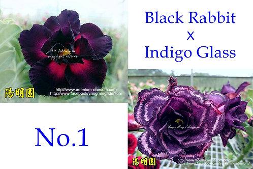 No. 1 (20 seeds)