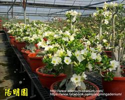 Mini white plants