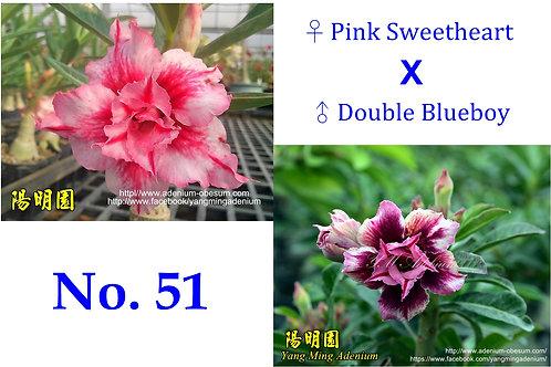 No.51 (30 seeds)