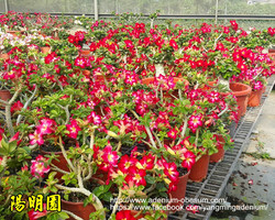 Mini red plants