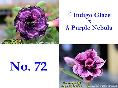 No. 72