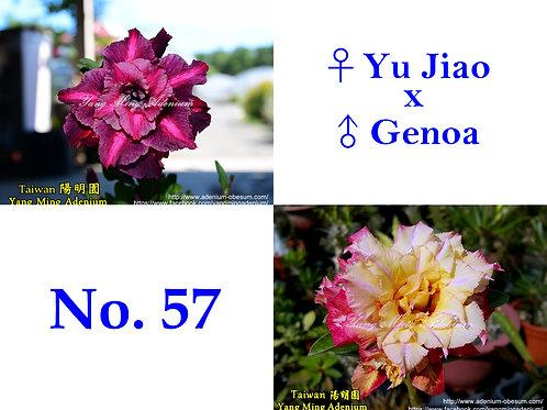 No. 57