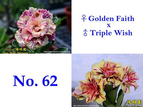 No. 62