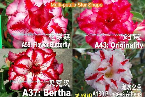 Multi-petals Star Shape mixed