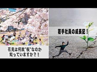 """【若手社員の成長記!】「第38回:花見は何故""""桜""""なのか知っていますか?!」~先ずは、常識を知ることから始めよう!~"""