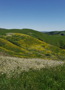 ranch 1.jpg