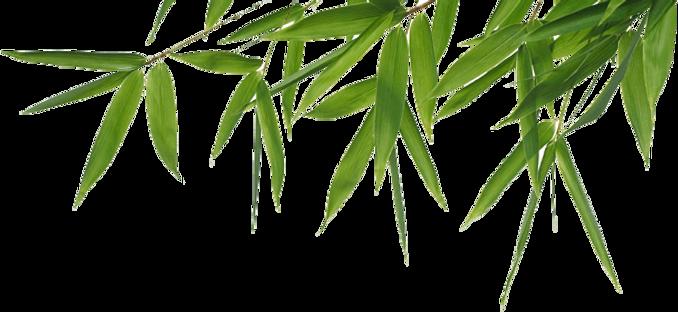 bambou pfz 3.png
