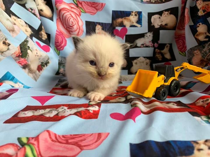 Seal mitted boy with a blaze