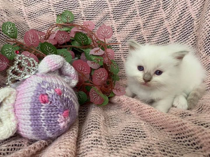 Lilac mitted girl