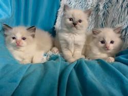Patsi's babies