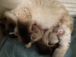 Sally and her five babies