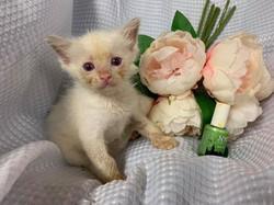 Lilac bicolour boy, green polish