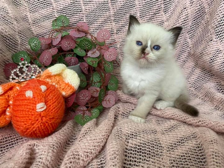 Seal mitted girl with a blaze