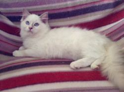Lilac mitted 2.JPG