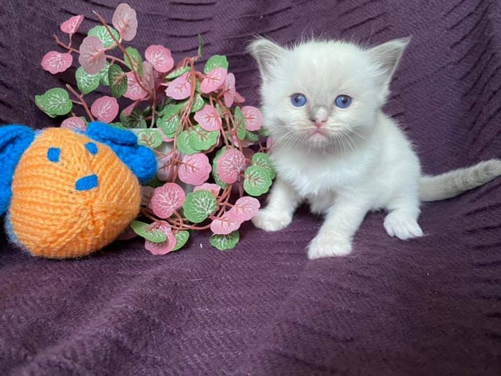 Blue mitted boy with a blaze
