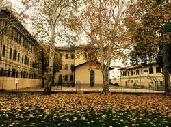 Foto autunno by savino