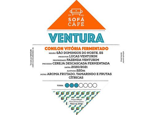 VENTURA | conilon vitória fermentado