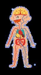 Un voyage à l'intérieur du corps humain!