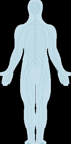 human-body-3.png