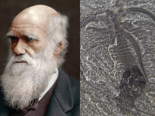 Denying Darwin: The Cambrian Explosion