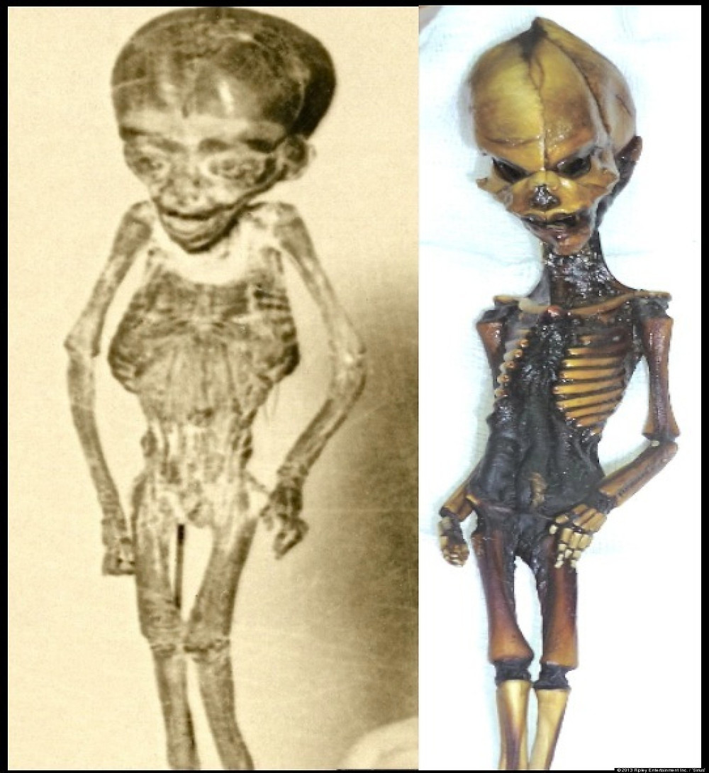 Left: Ripley's Atta Boy found in 1933. Right: The Atacama Humanoid found in 2003