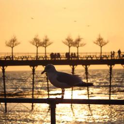 Seagull on the Sea.jpg