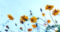 Wild Flowers_edited_edited.jpg