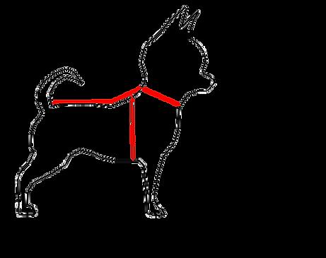 mesure chien image.png