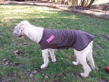 chien de martine manteau.jpg