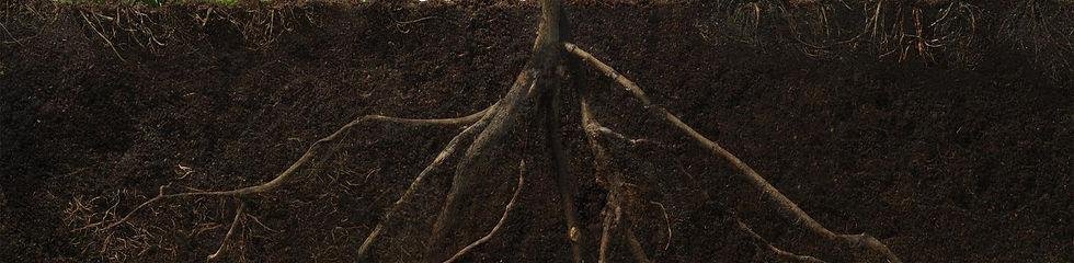 roots2_edited.jpg