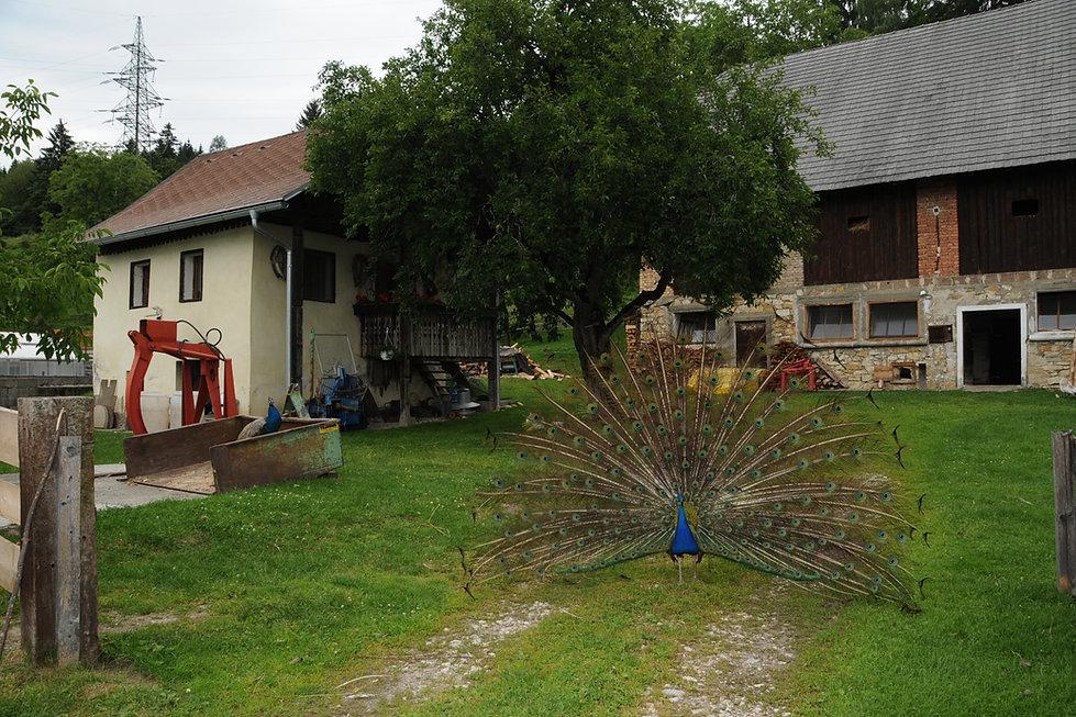 Bauernhof Wanker