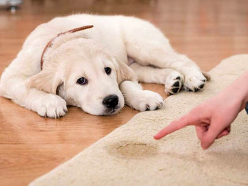 Removing Pet Stains From Carpets