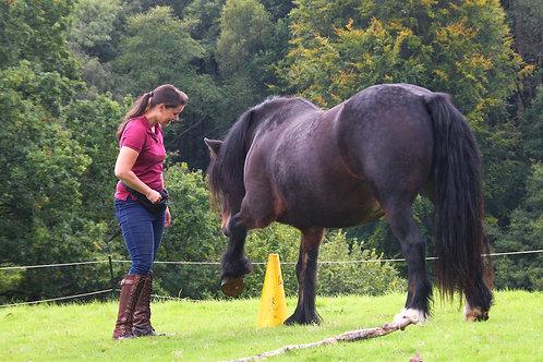 Individual Horsemanship Lesson