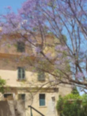 Purple tree.jpg
