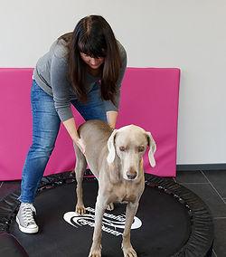 Einsatzgebiete Hundephysiotherapie