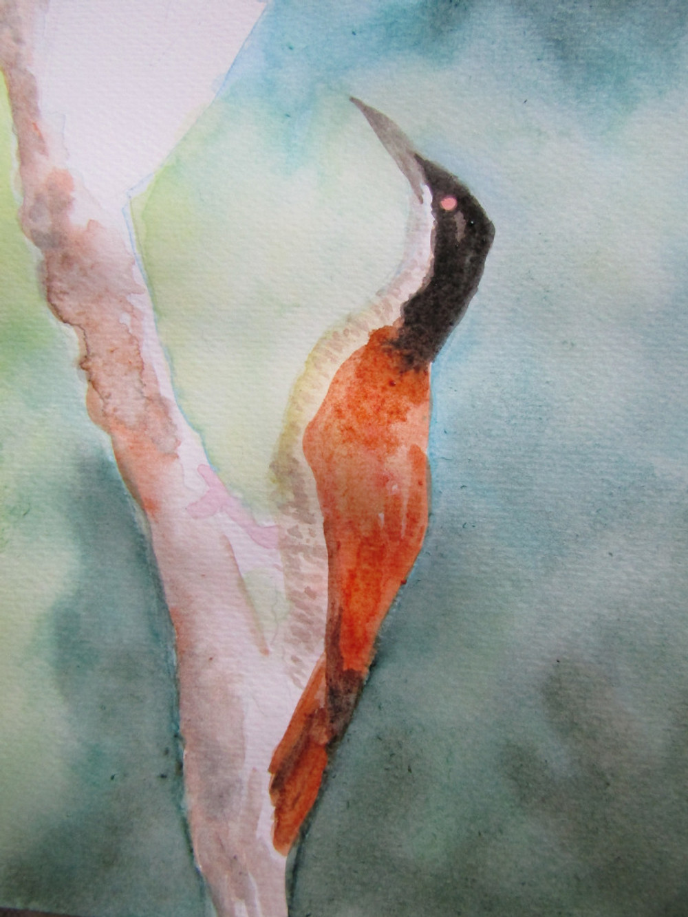 Paradise Bird Watercolour