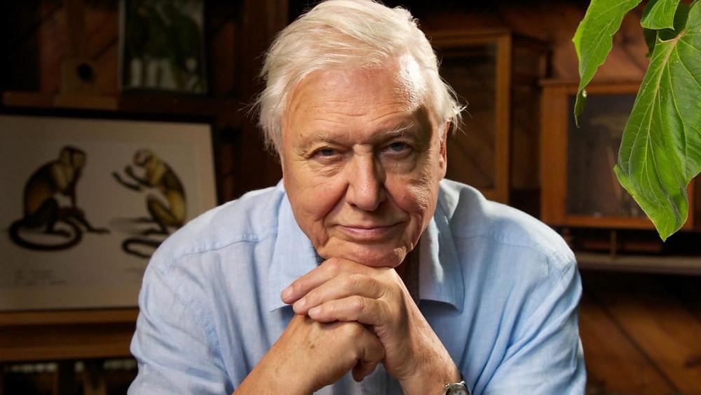 David Attenborough Art Conservation